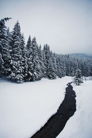 Landscape_Collection Nature Pine Snow ❄ Winter Beauty In Nature Clear Sky Cold Temperature Day Landscape Nature Nature_collection No People Outdoors Pine Tree River Scenics Sky Snow Snow Covered Trees Tranquil Scene Tranquility Tree White Color Winter