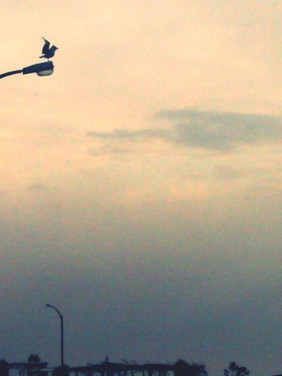 Trabzon Sky ..