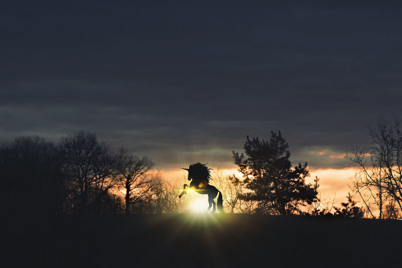 Silhouette man riding bicycle on tree against sky during sunset