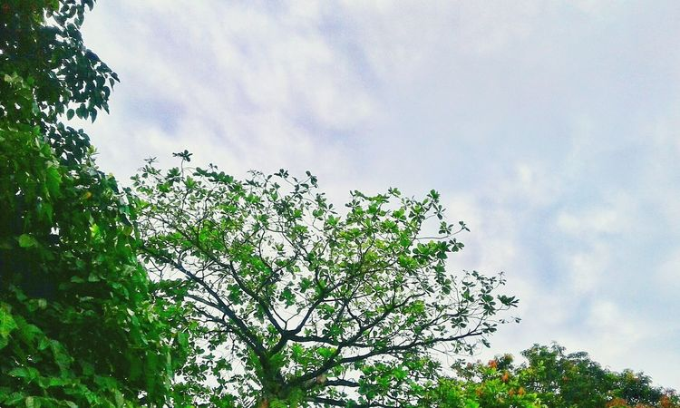 Blue Sky Green Trees And Leaves Nature Photography First Eyeem Photo