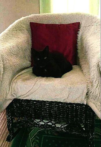 This beautiful boy! Relaxing Kitty Kitty Love My Kitty <3 Lovemycat♥
