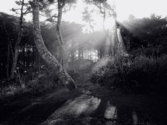 Streamzoofamily Enjoying The Sun Sun Light And Shadow Trees Black & White Bw_ Collection Monochrome