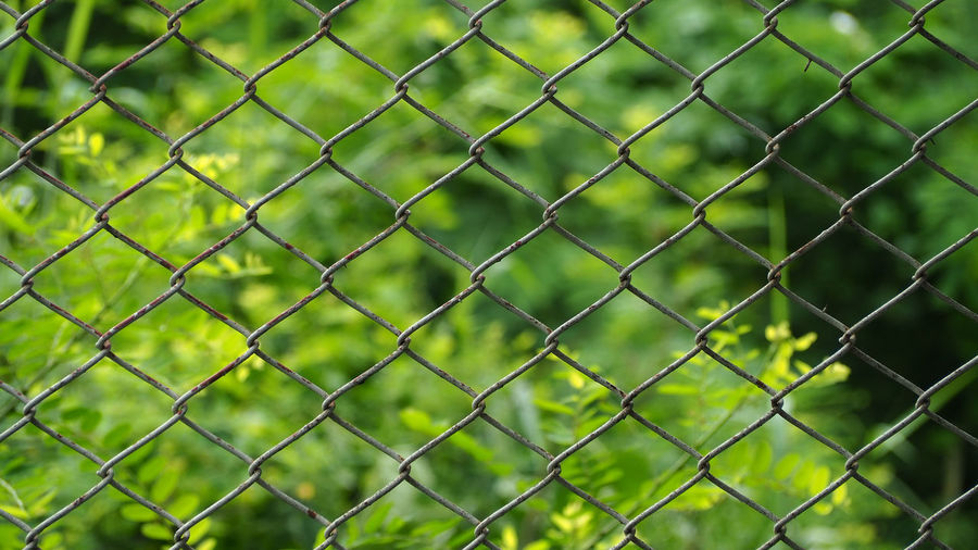 wire mesh with tree background Backgrounds Barrier Boundary Chainlink Fence Close-up Day Fence Focus On Foreground Full Frame Grass Green Color Metal Nature No People Outdoors Pattern Plant Protection Safety Security Wire Mesh Wire Mesh Background