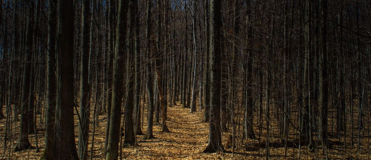 Follow the path Forest Tree No People Land Tranquility Plant Night WoodLand Scenics - Nature Nature Illuminated Celebration Beauty In Nature Pinaceae Coniferous Tree Tranquil Scene Backgrounds Growth Decoration Trunk Stay Out