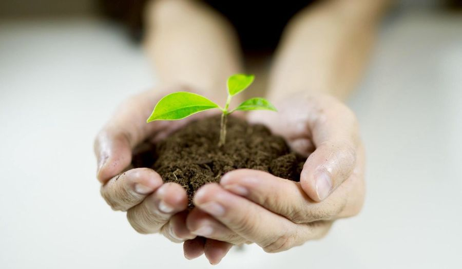 Growth Human Hand Plant Human Body Part Leaf New Life Fragility Planting Beginnings Hands Cupped Close-up Sapling Nature One Person People Adult Adults Only Day
