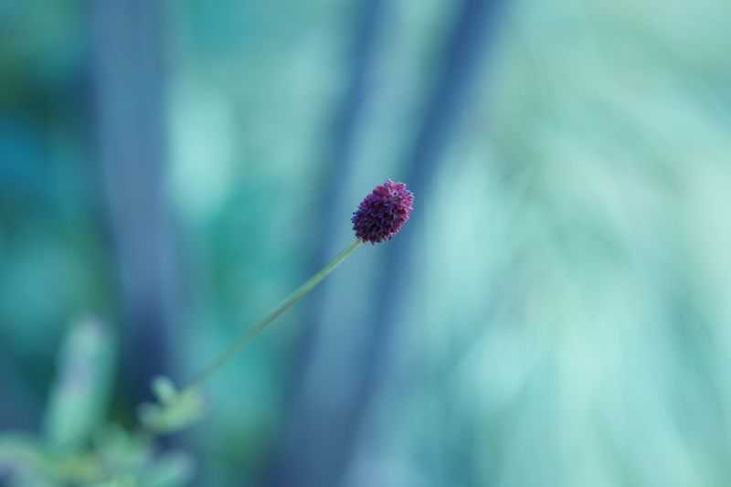 Tranquility Close-up Nature Outdoors Plant Freshness Greenery EyeEm Nature Lover Getting Inspired Flower Burnet Eye4photography