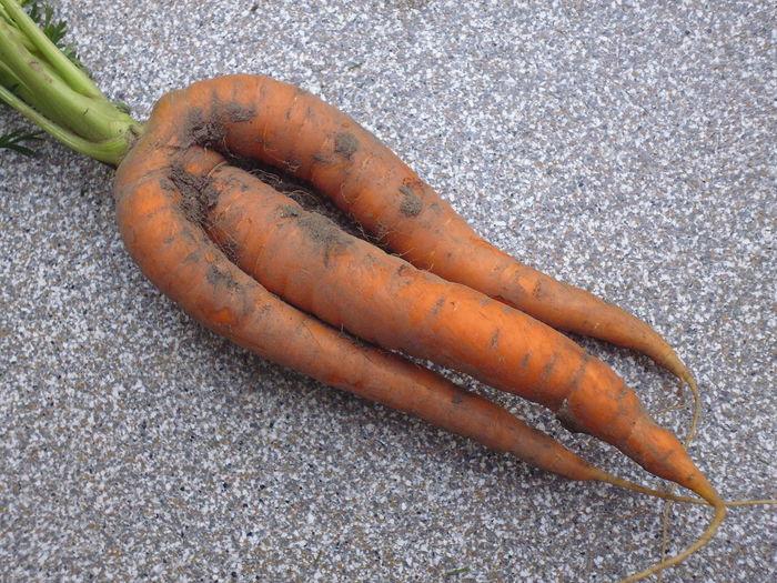 Carrots Carrot Karotte Karotten Dreibeinig Tripods Laune Der Natur Garten Garden Gartenglück Healthy Food Vegan Gemüse Möhre Still Life High Angle View Food And Drink Food No People Close-up Day Freshness