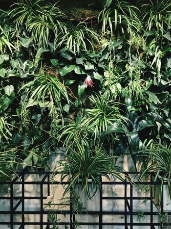 Plant Growth Tree Architecture Day No People Built Structure Nature Green Color Leaf Plant Part Tropical Climate Beauty In Nature Palm Tree
