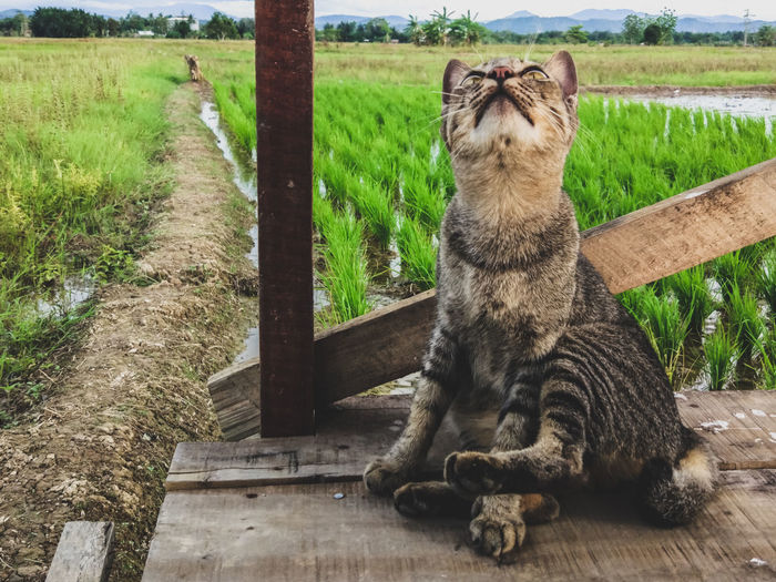 Cat kucing. Cats Of EyeEm Cat Cat Lovers Animal Themes No People Outdoors Animals In The Wild Animal Photography Animal Portrait Living Organism EyeEm Indonesia EyeEm New Here Be. Ready. Step It Up EyeEmNewHere One Step Forward