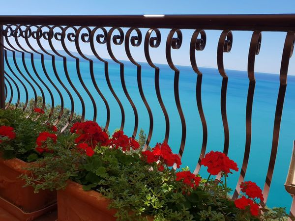 seaview Blue Water No People Non-urban Scene Sea View Viewfromterrace Blue Sea Blue Sea Red Flower Red Sky Close-up