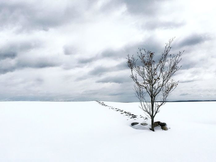 Winter Snow Landscape Cold Temperature Tranquility Bare Tree Outdoors