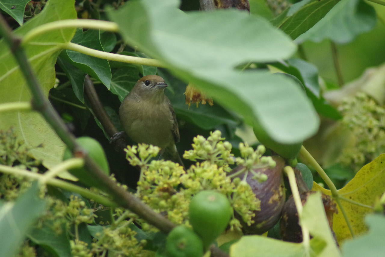 BIRDS PERCHING ON A PLANT