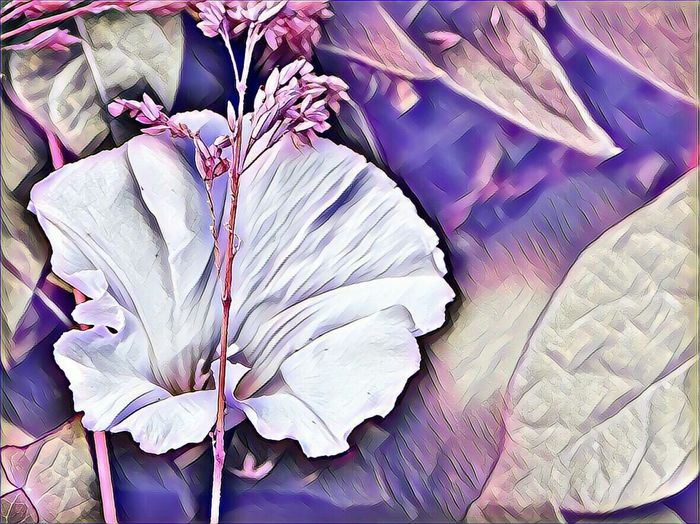 I'm A Edit-maniac😄😍 Enjoing Life For My Friends 😍😘🎁 Playtime! Colors Are My Life😍 Tranquillity Tranquil Scene Floweredit Artistic Expression Do What You Love And Love What You Do❤
