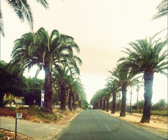Driving Palm Trees Road Barossa Valley
