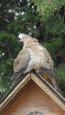 Animal Themes Bird Lover Bird House Mourning Doves Perching Trees Day Nature Outdoors Bird One Animal Animals In The Wild Animal Wildlife Low Angle View Tree No People Close-up