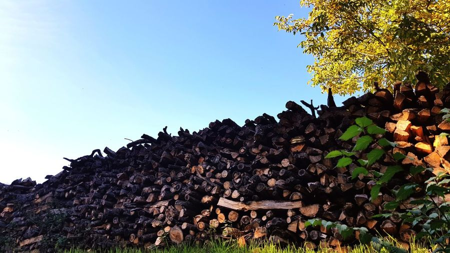 Autumn Autumn colors Autumn Leaves EyeEm Best Shots EyeEm Nature Lover Wood Wood - Material Log Logs Pile Pile Of Wood Firewood Firewood Stack Firewood Wall Sky Sunlight Tree Clear Sky Sky Close-up Plant Life