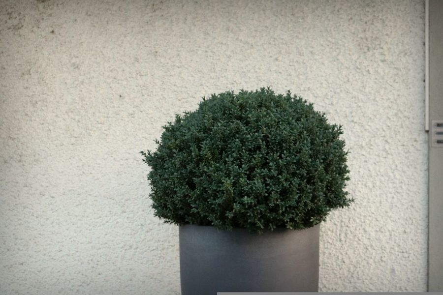 Elementary Minimal Outdoors Close-up Tree No People Plant Green Color The Week On EyeEm