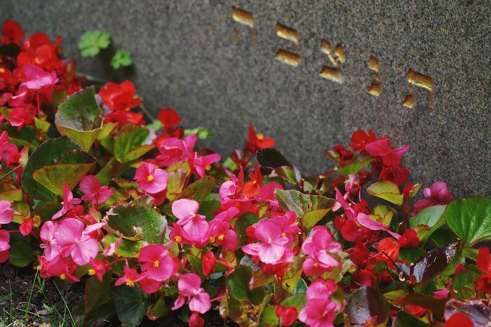Jewish Cemetery Graveyard Cemetery Solna Hagalund Sweden Showcase July 2016 Juli Niklas TakeoverContrast Art Is Everywhere EyeEm Diversity BYOPaper! The Week On EyeEm Mix Yourself A Good Time Perspectives On Nature Summer Exploratorium
