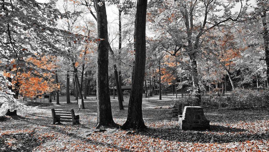 A Woytovich Motion A Woytovich Motion Berks County, Pa. Cemetery Photography Church Tower Cityscape Jeff Woytovich Reading, PA. St. Mary's Roman Catholic Church