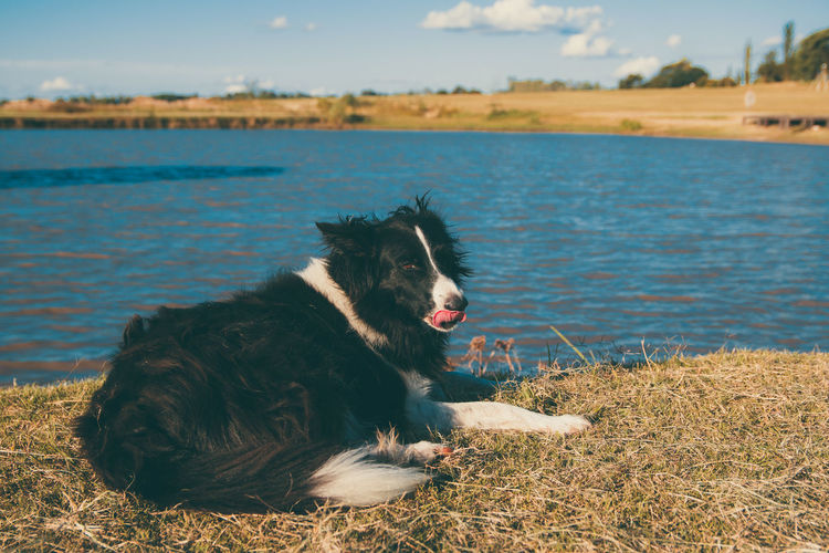 Dog relaxing on a land