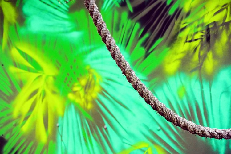 Rope Swing Copy Space Beauty In Nature Detail Vibrant Color Full Frame Rope Day Pattern No People Non-urban Scene Nature Green Theme Outdoors Ropes Green Color Growth Palm Tree Leaf Tree Plant Botany Saturated Color Backgrounds Textured  Leaves Plant Life Tropical Climate Green