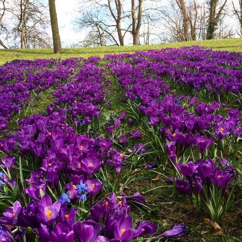 Spring Flowers Spring