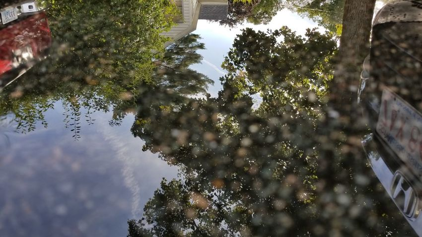 Tree Reflection Nature No People Outdoors Day Water Low Angle View Growth Abstract Beauty In Nature Sky Close-up Eyeemphoto