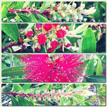procesos. un tiempo para todo. The Process Evolution  Flowers Compositions