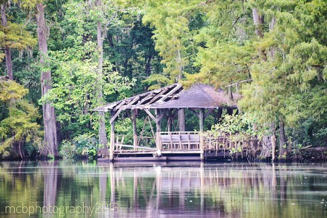 wideer shot Tree Water Waterfront Built Structure Architecture Tranquility Lake Tranquil Scene Gazebo Nature Growth Reflection Scenics Day Green Color Branch Outdoors Non-urban Scene Lush Foliage Beauty In Nature Seen Better Days Damaged South Louisiana Bridge - Man Made Structure
