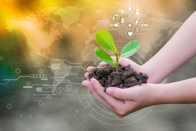Sapling Body Part Child Childhood Close-up Day Finger Green Color Hand Holding Human Body Part Human Hand Indoors  Lifestyles Nature One Person Plant Plant Part Real People Sapling Sunflower Sapling Tree Saplings 🌲 Fir Trees Young Green Color Women