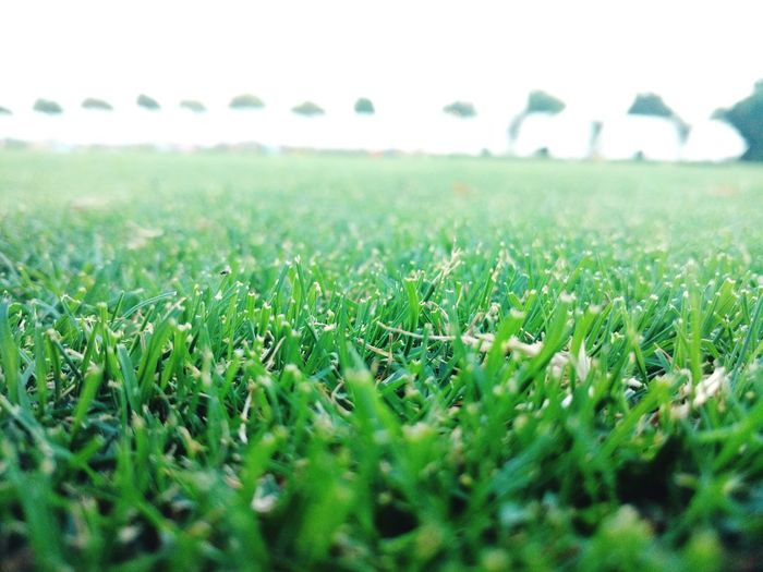 Green Grassland H C Photography Nothing But The Best Learn & Shoot: Balancing Elements Ahmedabad India Ahmedabad Tree Naturelovers Telling Stories Differently 2016 EyeEm Awards TakeoverContrast My Year My View Miles Away The Week On EyeEm