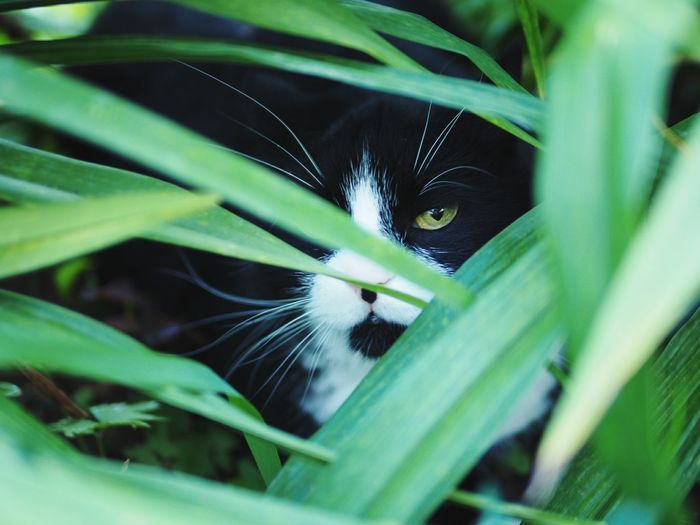Close-up portrait of cat on plant