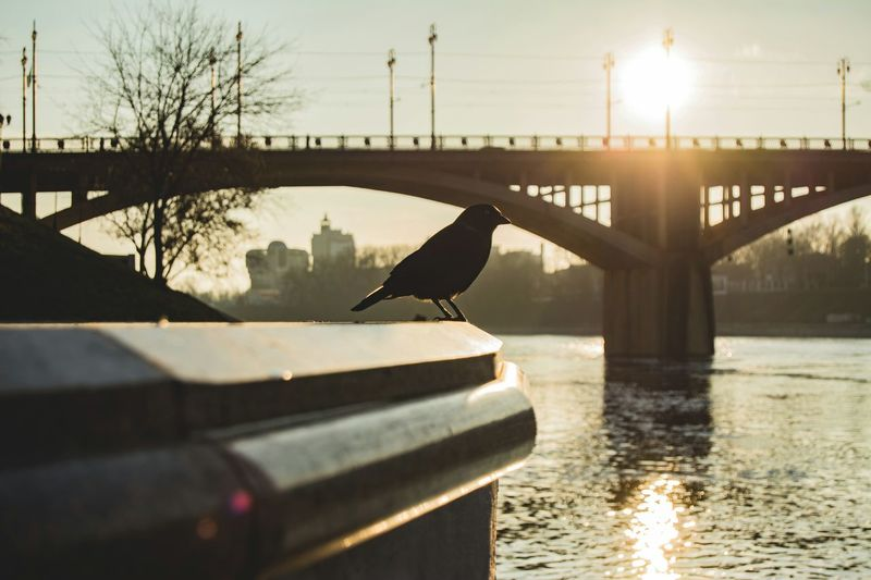 Sunset Composition Silhouette Bridge Cityscape Landscape From My Point Of View By Ivan Maximov Eyeem Photo The Week On EyeEm Belarus City Vitebsk,Belarus Traveling Sunlight River River Reflection Architecture Water Reflection Lake One Animal Animal Wildlife Animals In The Wild Animal Themes Bird Nature Outdoors No People Day Sky The Street Photographer - 2018 EyeEm Awards