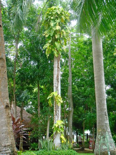 Palms Plants Plants 🌱 Hugging A Tree Tree_collection  Trees Holiday Traveling Nature