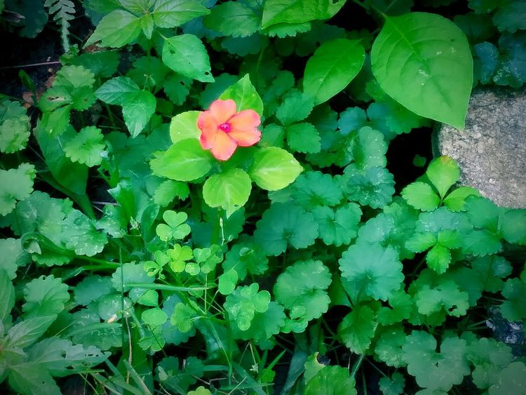 Nature Beauty In Nature Green Color Flower Plant Outdoors Day No People Blooming Flower Head Close-up Leaf Growth Freshness Fragility