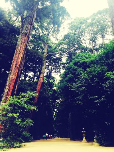 Nature On Your Doorstep Forest Trees Nature Beautiful Beautiful Nature Japan