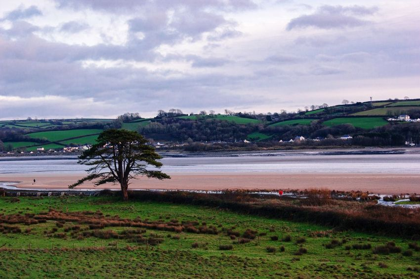 Water Sky Nature Beauty In Nature Tranquility Scenics Sea Landscape Cloud - Sky Tranquil Scene No People Tree Beach Grass Outdoors Growth Day Horizon Over Water Llansteffan