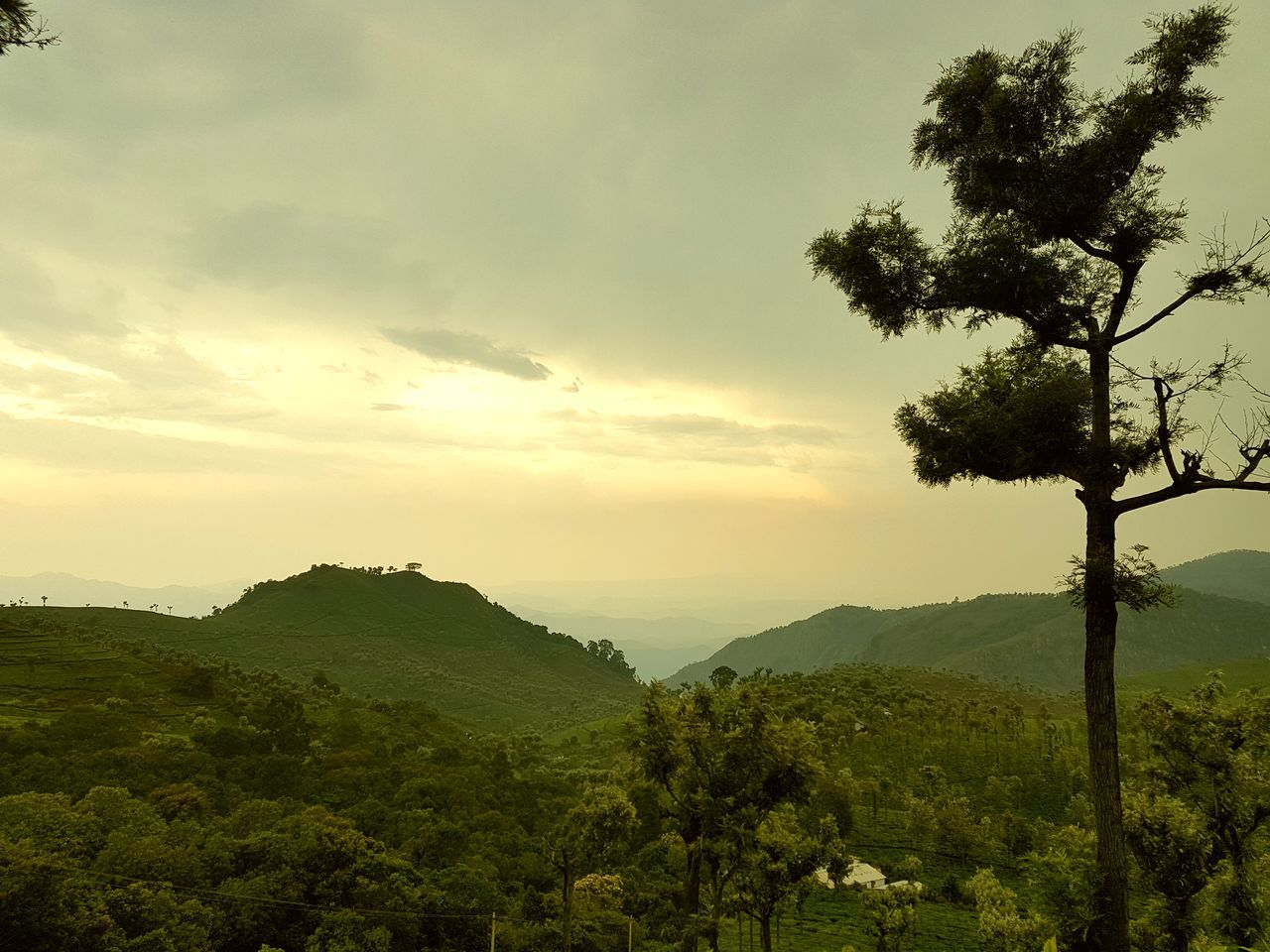 tree, nature, mountain, beauty in nature, landscape, sky, growth, scenics, no people, outdoors, day