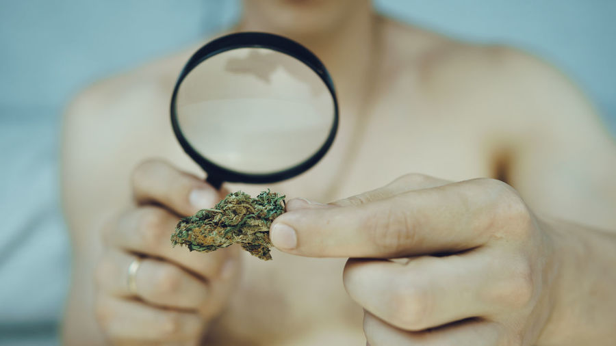 Midsection of man looking cannabis through magnifying glass
