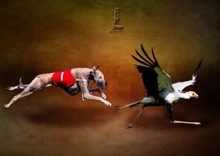 Animal Animal Themes ArtWork Bird Bird Sektrtär Composing Grayhound Racing Postprocessing Two Animals