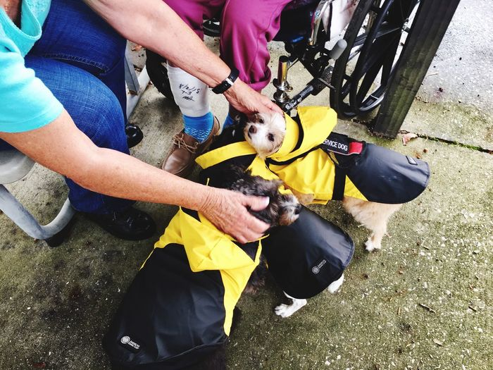 Comfort dog's wearing their raincoats Comfort Dogs Real People High Angle View Day People Lifestyles Men Leisure Activity