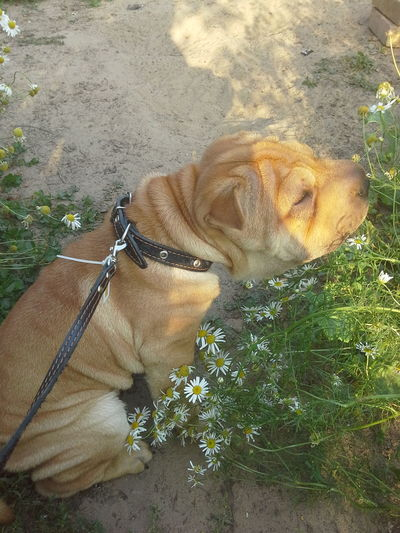 Dogs Of EyeEm Chamomile Field 🌼🌼🌼🌼🌼 Summer ☀ Flover, Green, Summer Flowers For My Friends Flowers, Nature And Beauty Flovers🌺beautiful Love 💕 EyeEm Best Shots - Nature Nature Photography Nature_collection EyeEm Nature Lover Naturally Me People