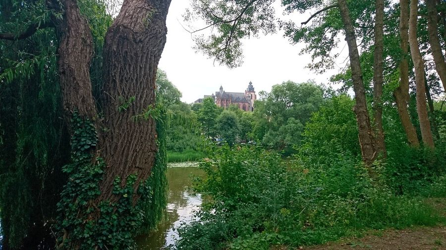 Wetzlar Cathedral from afar. Wetzlar Germany Wetzlar Cathedral Wetzlarer Dom Dom Unserer Lieben Frau Cathedral Afar FAR AWAY Green Trees Urban Nature Lahn Lahn River River Framed Framed By Trees Tree Water Grass Sky Green Color