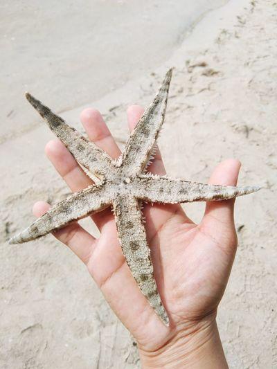 Close-up of hand holding umbrella on beach
