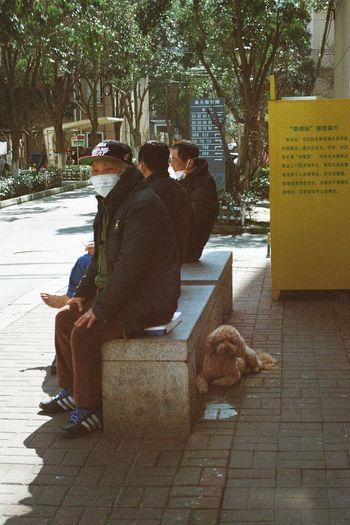 Dog sitting on footpath in city