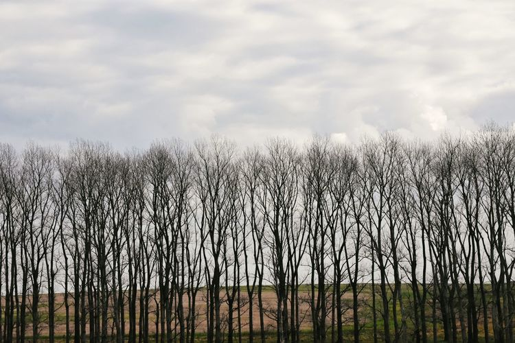 Panoramic shot of bare trees on field against sky
