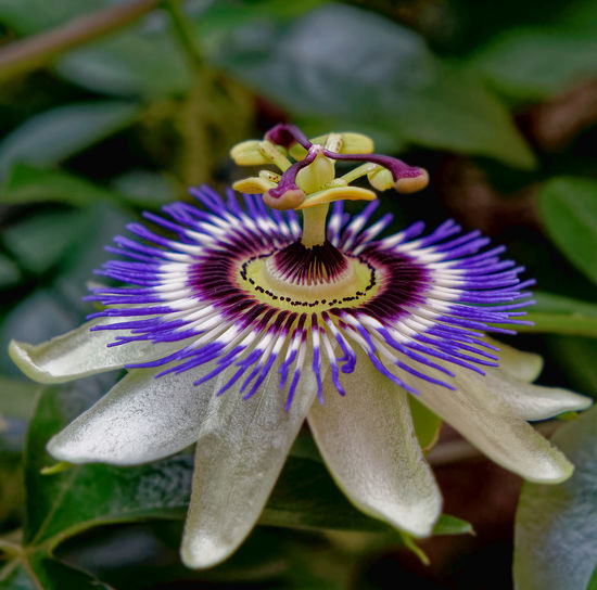 Close-up of purple flower in bloom