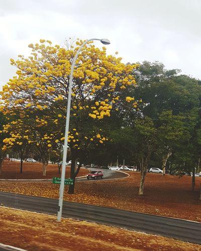 □ https://www.instagram.com/_sadwinter/ □ #FollowMe #follow #f4f #followme #TagsForLikes #TFLers #followforfollow #follow4follow #teamfollowback #followher #followbackteam #followh #urbanphotography #daylight #Brazil #Brasil #FollowMeOnInsta #girl #Women #badgirl #bsb #EyeEm #car #flower#garden#nature#ecuador#santodomingoecuador#eyeEmfollowers#iphoneonly#nofiltrer#macro_garden#pretty#beautiful#followme#sho Tree Sky Goal Post