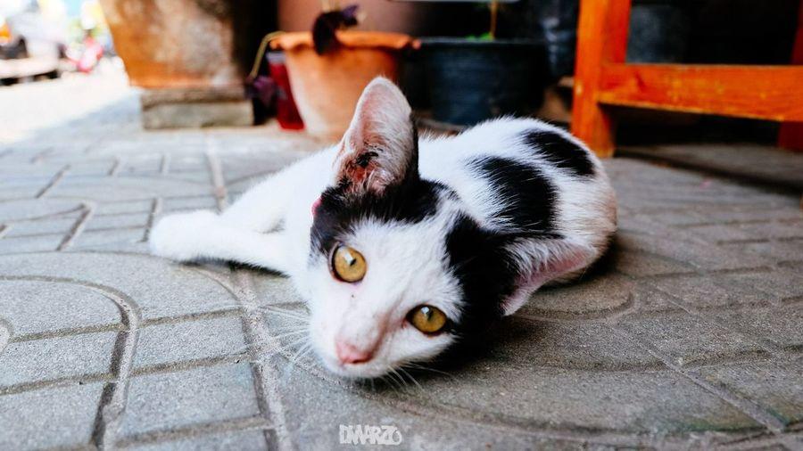 Cat Cute Cute
