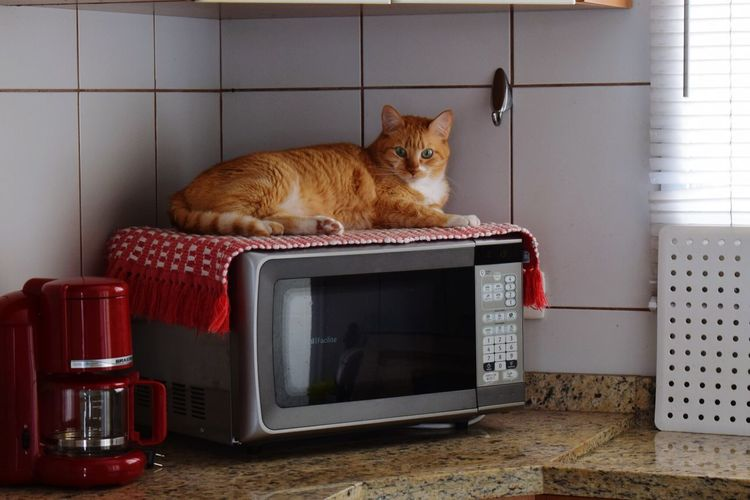 Cat Lying On Microwave